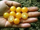 Wildtomate 'Golden Currant' (Bio-Saatgut)