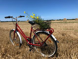 Vélo adulte ROUGE standard
