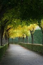 Fußweg im Würzburger Residenzgarten