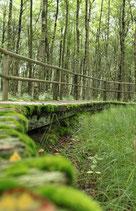 Green Gangway