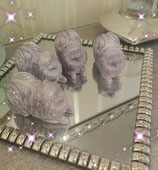 Silber-grau Pomeranian