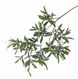 Olivenzweig UV-Schutz