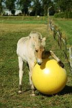 Pferde Spielball -Power Ball