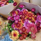 Hinwiler Chrysanthemen im Bund