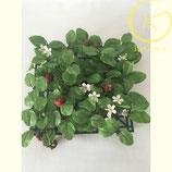 Decoratieve aardbeien grastegel kunststof