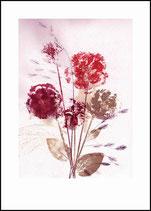 Bouquet 1, dusty. 50x70, in passepartout