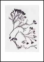 Seaweed, grey. 70x100