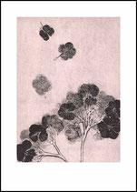 Hortensia, blush. 50x70