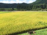 玄米30Kg/村木さんのキヌヒカリ