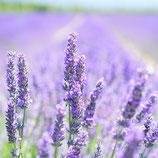 AROMELL - Lavendel