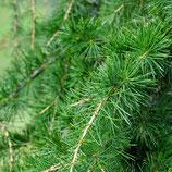 AROMELL - Zedernholz
