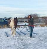 """Video-Online Kurs """"12 Führübungen zum Aufbau einer besonderen Partnerschaft zwischen Pferd und Mensch"""""""