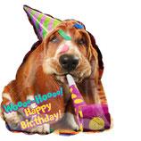 Avanti Basset Hound Birthday