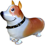 1 Laufender Ballon - Ø 50cm - Hund Jack Russel