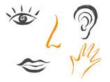 Atem und Sinne: Eine Reise zur Vielfalt sinnlicher Wahrnehmungen und zum Reichtum der äußeren und inneren Welt