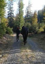 Horsetrekking- Wandern mit dem Pferd