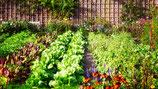 Grundstock für Gemüsegarten