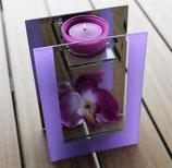 Lichtlein (Orchidee)