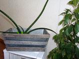 Blumen-Kistchen 30 x 17 cm