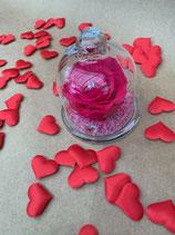 Rose stabilisée avec cloche en verre