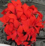 Géranium Lierre simple Rouge impérial