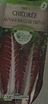 Chicorée rouge de Trévise