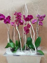 3 ORCHIDEES dans jardinière zinc