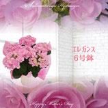 さかもと園芸のあじさい エレガンス 6号鉢