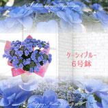 さかもと園芸のあじさい ケーシィブルー 6号鉢