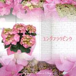 さかもと園芸のあじさい ユングフラウピンク 5号鉢