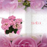 さかもと園芸のあじさい エレガンス 5号鉢