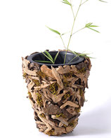 Teak-Wurzelholz- und Driftwood-Blumentöpfe und -Schalen