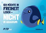 Aufkleber -Fische – Ich möchte in Freiheit leben!