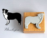Motivstempel - Border Collie