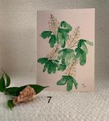 Little Viola - Kastanje in bloei
