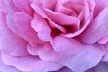 Blumen 003