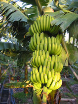 1 bag of bananas (10kg)