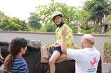 1 horse riding therapy (60minutes)