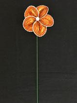 Blume orange, Zackenrand