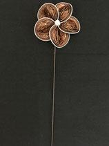 Blume braun