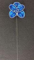 Orchidee königsblau
