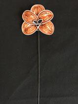 Orchidee apricot-grau