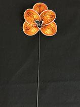 Orchidee orange-cosi