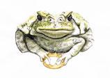 "Postkarte ""Froschkönig"""