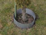 Rasenkanten als Baumring durchm 37 cm und 12 cm hoch