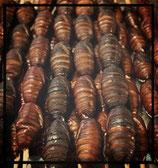 Vers à soie (Bombyx Mori pupae) 30 g