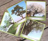 Baum-Kartenset