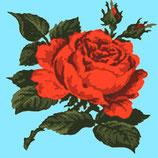 Roses sur fonds bleu