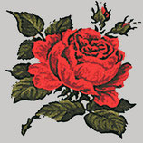Roses sur fonds gris