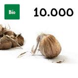 10 000 bolbos bio calibre 10-11